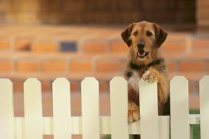 three reasons to install a fence for your dog